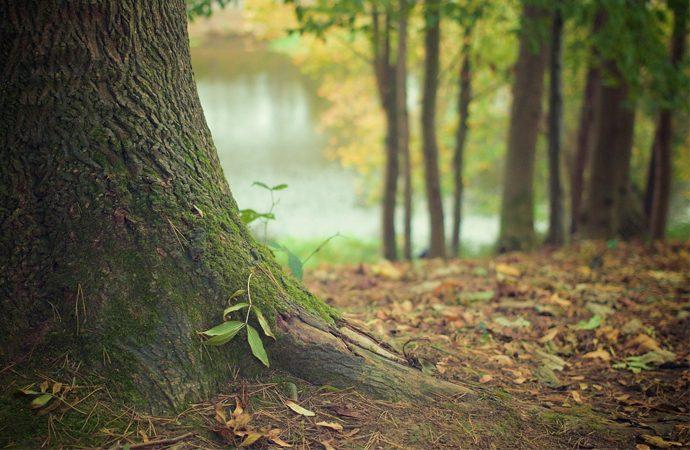 Skog. Foto: Pixabay